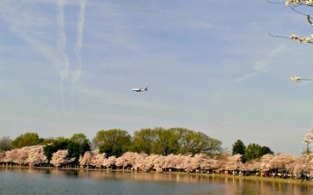 Airplanes over the Tidal Basin